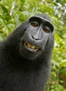 singe souriant